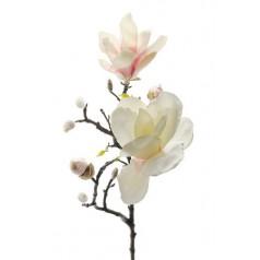 Riktigt naturtrogen Magnolia