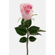 Rosa ros 48 cm.