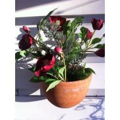 Jul ros kvist.